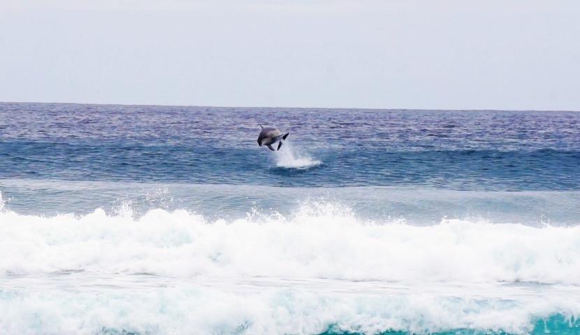 Te Arai, Goat Island, &Dolphins!